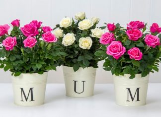 Top Mothers Day Gift Ideas for mom