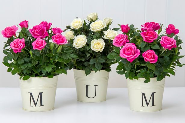 Top-Mothers-Day-Gift-Ideas
